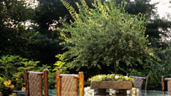 Decorative trees and shrubs